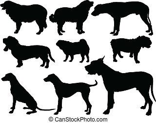 -, vektor, hund, sammlung