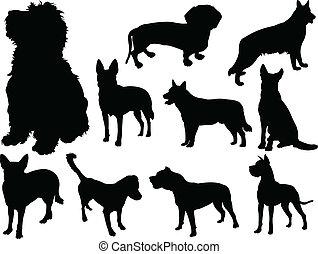 2, vektor, -, hund, sammlung