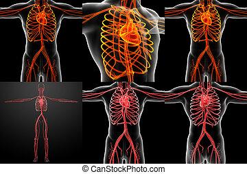 3D Darstellung des Gefäßsystems.