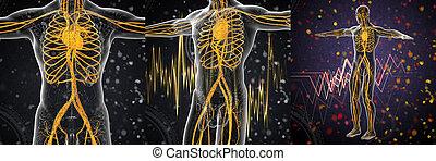 3d die medizinische Abbildung des menschlichen Gefäßsystems.