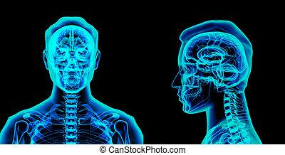 3d illustrierte das Gehirn.