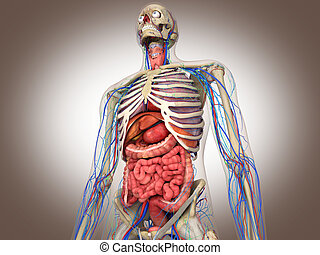 3D macht Darm-Binnenorgel aus