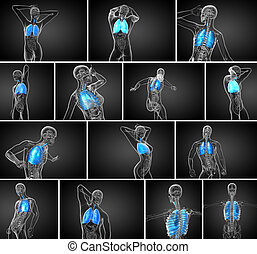 3D Reproduktion des menschlichen Atemsystems.
