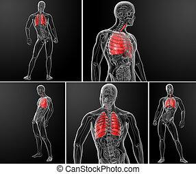 3D zeigt die Lunge.