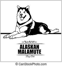 abbildung, alaskisch, -, t-shirt, vektor, abzeichen, logo, malamute, schablone