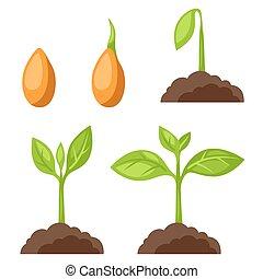 Abbildungen mit Phasen Pflanzenwachstum. Bild für Banner, Webseiten, Designs