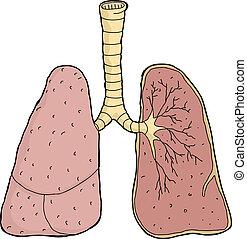 abschnitt, kreuz, lungen