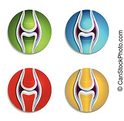 Abstract colorful Joint Anatomie Icons set.