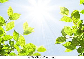 Abstract sonniger Sommerbokeh Hintergrund mit grünen Blättern.