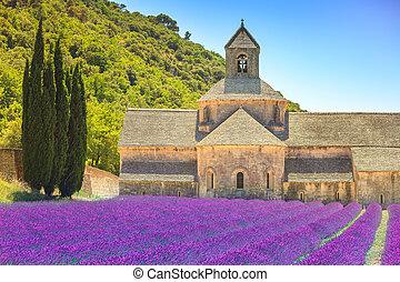 Abtei von Senanque und blühenden Reihen Lavender Blumen. Gordes, Holz, Vaucluse, Beweise, Frankreich, Europa.