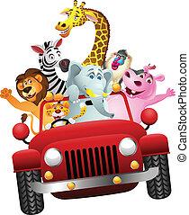 afrikanische Tiere in rotem Auto