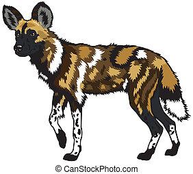 Afrikanischer Wildhund.
