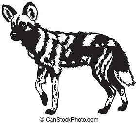 Afrikanischer Wildhund schwarzweiß.