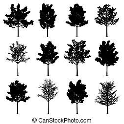 ahorn, bäume