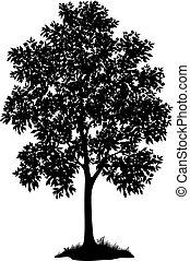 Ahornbaum und Gras, Silhouette