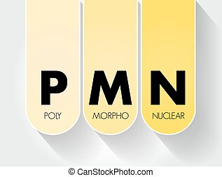 akronym, hintergrund, pmn, -, begriff, polymorphonuclear