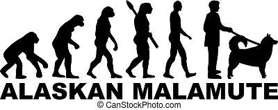 alaskisch malamute, evolutionsphasen, wort