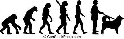 alaskisch malamute, evolutionsphasen