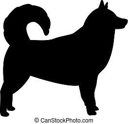 alaskisch malamute, silhouette, schwarz