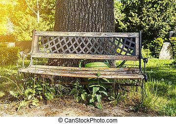 Alte Holzbank in einem Park mit grünem Wasserrohr.