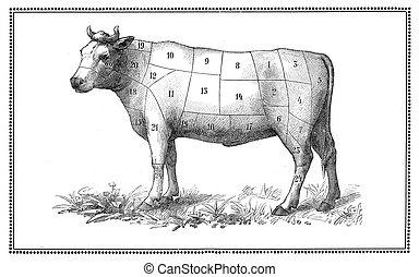 Alte Rinderkarte