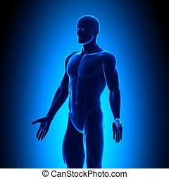 Anatomie-Körper - Iso-View - blaues Gehäuse.