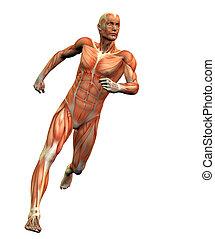 Anatomie-Mann #3