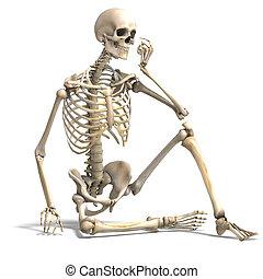 Anatomie-richtiges männliches Skelett. 3D, der mit dem Ausschnitt und dem Schatten über weiß ist