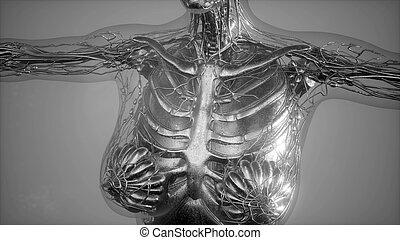 Anatomie-Tomographie-Scan des menschlichen Körpers.