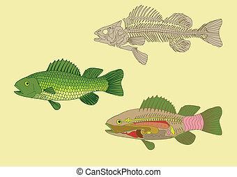 Anatomie von Fisch.