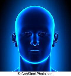 Anatomiekopf - Frontansicht - blauer Kokon