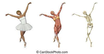 Anatomische Überlagerungen - Ballett