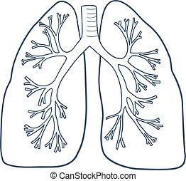 Anatomische Lungen isoliert auf weiß.