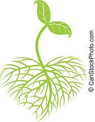 Anbaupflanze