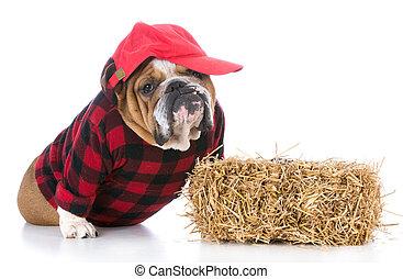 angezogene , mögen, hund, landwirt