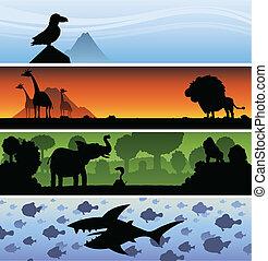 Animal Banner.