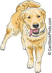 apportierhund, glücklich, labrador, rasse, vektor, lächeln, skizze, hund