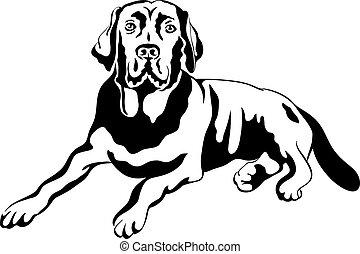 apportierhunde, labrador, rasse, vektor, skizze, hund