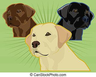 apportierhunde, verschieden, labrador