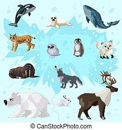 arktisch, satz, fauna, karikatur