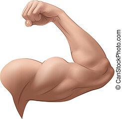 arm, mannes