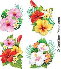 Arrangement von Hibiskusblumen
