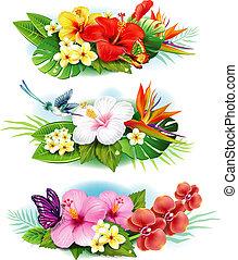 Arrangement von tropischen Blumen