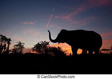Asiatischer Elefant bei Sonnenuntergang
