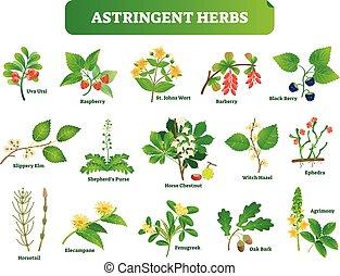 Astringent Kräuter Vektorgrafik Sammlung. Natürliche Homöopathie wilde Pflanzen botanische Set.
