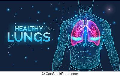 atmen, organe, gesunde, lungen, banner, menschliche , krankheit, koerper, prävention, koerperbau, vektor, healthcare, system, atmungs, illustration.