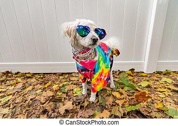 auf, angezogene , hippie, mögen, hund