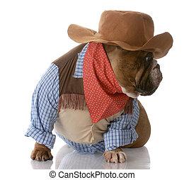 auf, angezogene , hund, cowboy