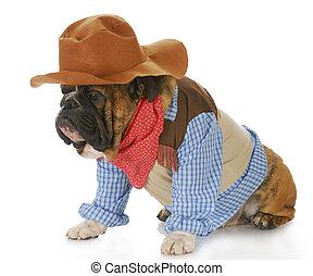 auf, angezogene , hund, mögen, cowboy