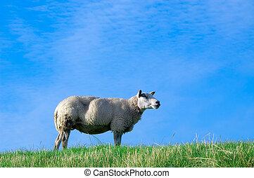 Auf frisch grünem Gras